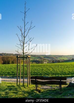 Eine Bank mit Blick auf das Naturschutzgebiet Oefter Tal in Essen, Ruhrgebiet, Nordrhein-Westfalen, Deutschland
