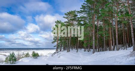 Panoramablick auf Pinien Wald in der Nähe in Schnee bedeckt Küste Meer während sonnigen Wintertag mit blauem Himmel mit Wolken. Stockfoto
