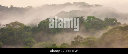Panoramablick auf den üppigen und nebligen Regenwald des Soberania Nationalparks im frühen Morgenlicht, Republik Panama.