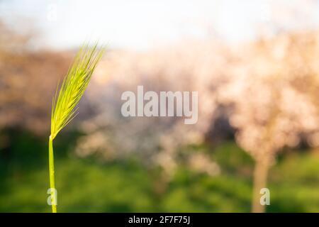 Frühlings- und Wachstumskonzept: Seitenansicht und Nahaufnahme auf grünem Gras an einem sonnigen Tag. Sonnenstrahl, der durch die Blätter scheint. Wachstum der Wirtschaft. Tageslicht.