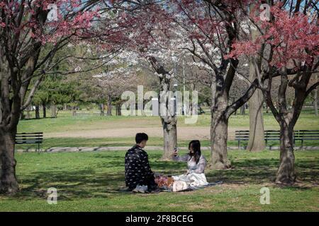 Ein junges asiatisch-amerikanisches Paar nimmt an Wochentagen ein Picknick-Mittagessen unter Kirschblütenbäumen im Flushing Meadows Corona Park in Queens, New York City, ein.