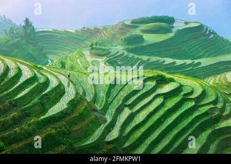 B5FRF9 Landschaft von Reisterrassen Longsheng Guangxi China