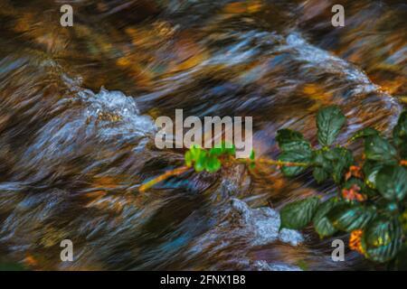 Nahaufnahme von sprudelnden Stromschnellen mit kleinen Wasserfällen des Clonaugh River mit klarem Bergwasser, das braune Blätter auf einem flussabwärts fließenden Grund zeigt.