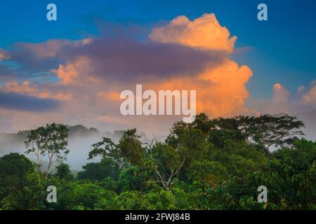 Buntes Licht am frühen Morgen im nebligen Regenwald des Soberania Nationalparks, Provinz Colon, Republik Panama, Mittelamerika.