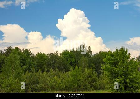 Sommerlandschaft mit Laubwäldern und großen weißen Wolken am blauen Himmel