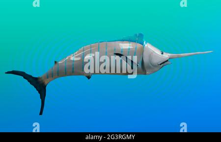 Marlin-Fisch