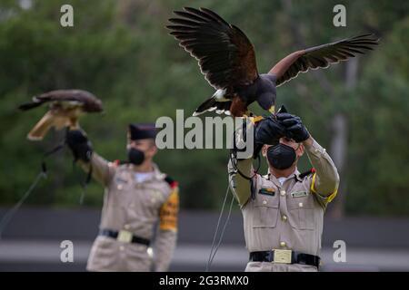 MEXIKO-STADT, MEXIKO - 17. JUNI: Ein Kadett der mexikanischen Armee, führt eine Schulung des Königlichen Adlers (Nationales Symbol) vor einer militärischen Bürgerveranstaltung durch, während der Rehabilitation und des Schutzes der vielen Arten im Nationalen Zentrum für die Kontrolle und den Schutz des Königlichen Adlers, Für die Reintegration der Arten in die Tierwelt. Die mexikanische Armee arbeitet an der Erhaltung und dem ökologischen Schutz von 39 Arten von Raubvögeln, die sich in der Genesung befinden und in der Erhaltung, um sie später in ihren natürlichen Lebensraum freizugeben. Am 17. Juni 2021 in Mexiko-Stadt, Mexiko. Quelle: SIPA US/Alamy Live News