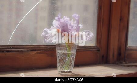 Iris aus Glas. Iris Blume auf alten verwitterten hölzernen Schweller mit rissigem Fenster auf dem Hintergrund. Tageslicht durch das Fenster. Dünne Blütenblätter. Retro-Style p