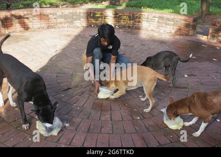 Dhaka, Bangladesch. Juli 2021. Hilem, EIN Freiwilliger, füttert streunende Hunde in einem Park während der landesweiten Sperre in Dhaka. Quelle: MD Mehedi Hasan/ZUMA Wire/Alamy Live News