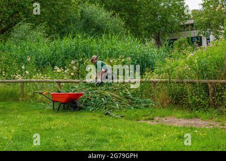 London, Großbritannien. Juli 2021. Pflege von Schilf am Barnes Common Teiches. Kredit: JOHNNY ARMSTEAD/Alamy Live Nachrichten