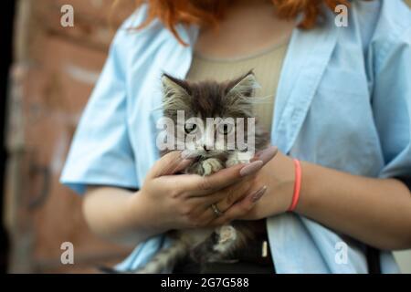 Kätzchen in den Händen eines Mädchens. Ein kleines Haustier aschert sich in den Händen. Frau mit einem Kleinkind.