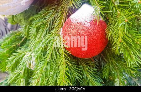 Eine rote Weihnachtskugel, mit Schnee bedeckt, auf dem Hintergrund eines Tannenzweiges, Weihnachtsschmuck auf der offenen, Banner.