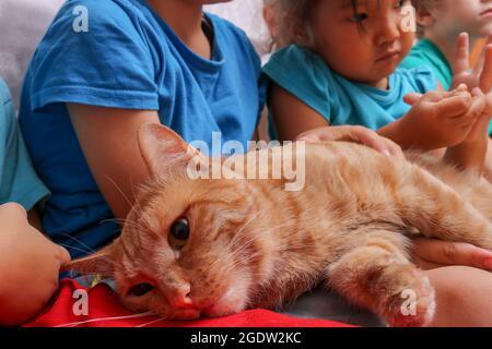 Nette Kinder und ihre Katze liegen zusammen. Kinder- und Haustierkonzept.