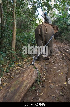 Elefanten bei der Arbeit schleppen Teak meldet sich im Wald in der Nähe von Lebin Shan Staat Myanmar Burma Asien - Stockfoto