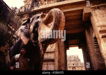 Elefant steht Guardian in Brihadeshwara Tempel einen Hindu-Tempel in Thanjavur in Tamil Nadu liegt Shiva gewidmet. - Stockfoto