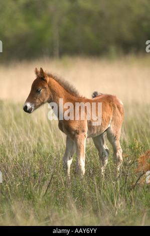 Wildpferd Colt stehen alleine auf einer Wiese - Stockfoto