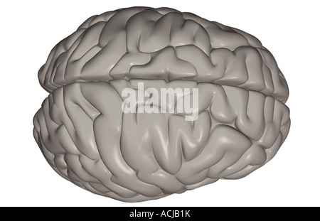 Das Gehirn - Stockfoto