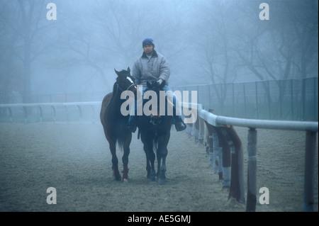 Mann reitet Rennpferd mit Begleiter Trab entlang Laufschiene nach frühen Morgen Morgen Training im Nebel - Stockfoto
