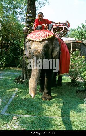 Elefant und Mahout, Riverside Rosengarten, Schulkind Nakorn Pathom, in der Nähe von Bangkok, Thailand - Stockfoto