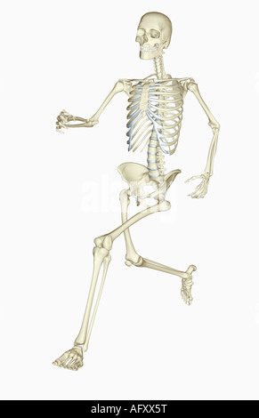 Skelett-Systems - Stockfoto