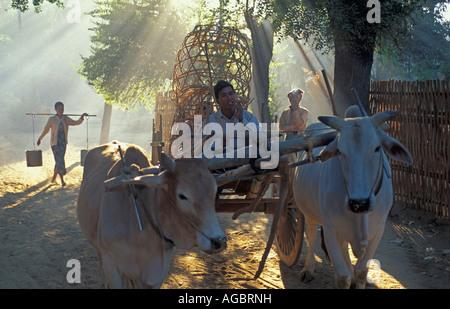 Myanmar, Bago Yoma Berge Mann reitet auf Ochsenkarren - Stockfoto