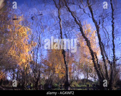 Relections Europas die bloße Springfield Shrewsbury Shropshire England Great Britain Uk - Stockfoto