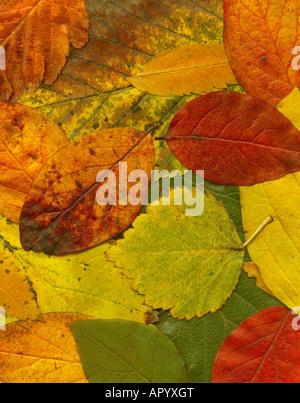 Riesige Hintergrund des Herbstes Blatt, das Bild ist hochauflösend und sehr detailliert und scharf - Stockfoto