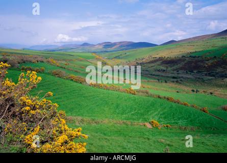 Felder in der Nähe von Dingle, County Kerry, Irland und Irland - Stockfoto