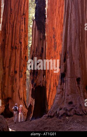 Wanderer im Sequoia Nationalpark, Kalifornien, USA - Stockfoto