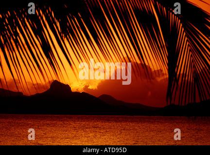 Dramatische feurigen Sonnenuntergang über den Grenadine Inseln in der Karibik gesehen durch Palm Frond silhouette - Stockfoto