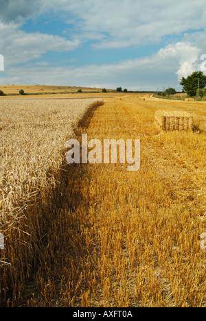 Heuballen bei der Ernte Wiltshire England UK GB EU Europa - Stockfoto