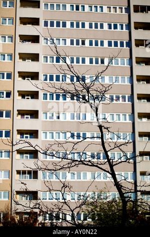 Hochhaus wohnen Wohnungen im Bereich Ladywood von Birmingham England UK mit einem toten Baum in die forground - Stockfoto