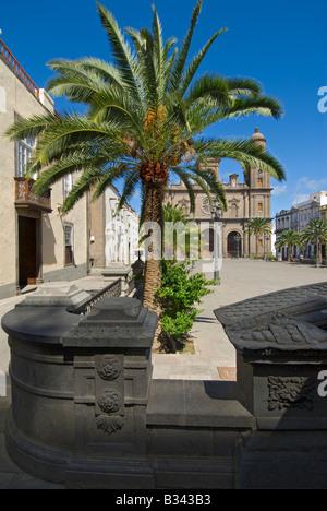 Cathedral und Plaza Santa Ana mit typisch Kanarischen Palme im Vordergrund Vegueta, Las Palmas, Gran Canaria Kanaren - Stockfoto