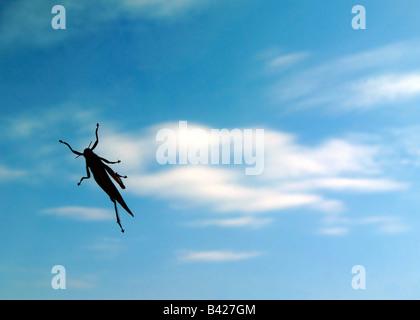 Grasshopper in den Himmel - Stockfoto
