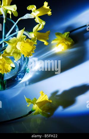 Gelbe Narzisse, Blumen, Stillleben, natürlichen, - Stockfoto