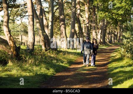 Ein Alter Mann und seine Enkelin Fuß in den Wald, Thetford Forest, Norfolk, Großbritannien - Stockfoto