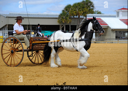 Gypsy Pferdeausstellung in Florida State Fairgrounds Tampa - Stockfoto