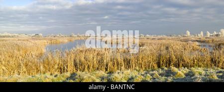Ein Blick auf die Feuchtgebiete am Sedgemoor, Teil der Somerset Levels in England, unter starkem Frost im Winter. - Stockfoto