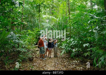 Tierbeobachtungen in den Regenwald, Costa Rica, Ökotourismus mit einem lokalen Naturführer - Stockfoto