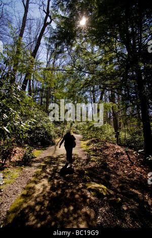 Eine Frau Wanderer geht auf einen immergrünen Wald-Trail im Frühling Nachmittagssonne im westlichen Pennsylvania - Stockfoto