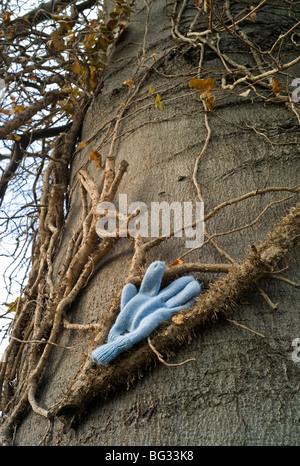 Verlorenen Handschuh auf Baumstamm gelegt - Stockfoto