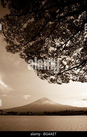 Kawaguchi, Japan, Honshu Insel Ko See, Mt. Fuji und Ahornbäume - Stockfoto