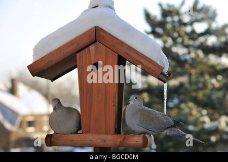 Zwei Eurasian collared Tauben (Streptopelia Decaocto) am Vogelhäuschen / Futterhaus / Vogel Tisch im Schnee im Winter - Stockfoto