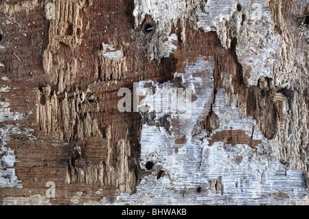 Holz Hintergrund - Johannes Gollop - Stockfoto