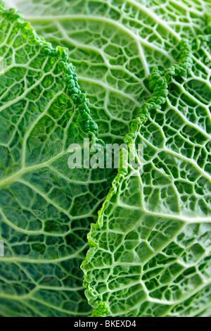 Nahaufnahme von frischen grünen Kohlblätter - Stockfoto