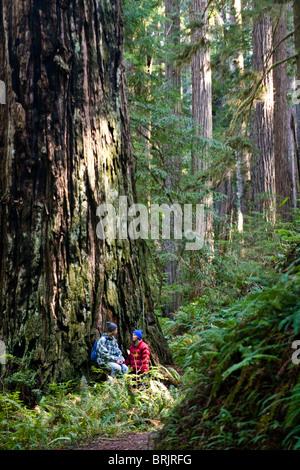 Ein junges Paar sprechen beim sitzen unter einer massiven Redwood in Kalifornien. - Stockfoto