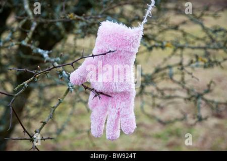 Flauschige rosa Handschuh gefangen auf Weissdorn Busch, Dartmoor, Devon UK - Stockfoto