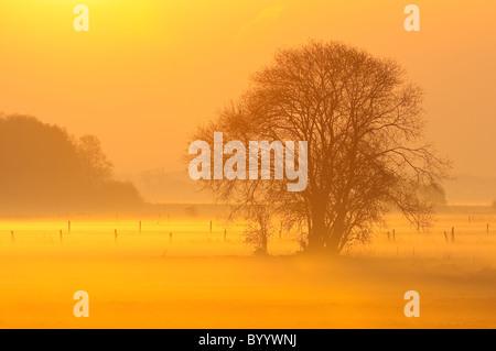 Morgennebel, verträumte Landschaft - Stockfoto