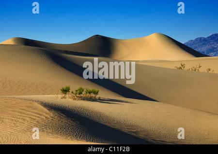 Mesquite Flats sand Dünen Stovepipe Wells Death Valley Nationalpark Kalifornien - Stockfoto
