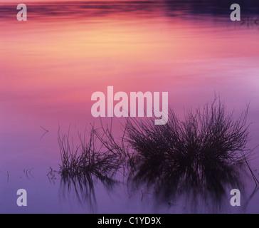 Sunrise Reflexionen am Mono Lake, Kalifornien Zustand-Naturschutzgebiet in Lee Vining Kalifornien - Stockfoto